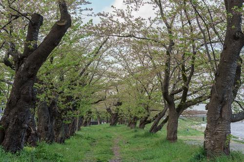 200505-002b.jpg